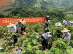 2020年8月天峨县新时代文明实践志愿者风采